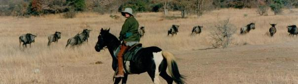 x Sophie Neville on Jigsaw in the Waterberg 1