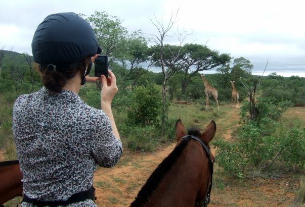 Photographing giraffe