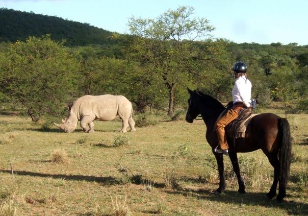 Sophie Neville watching rhino