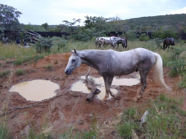 Horse inspecting elephant bathroom