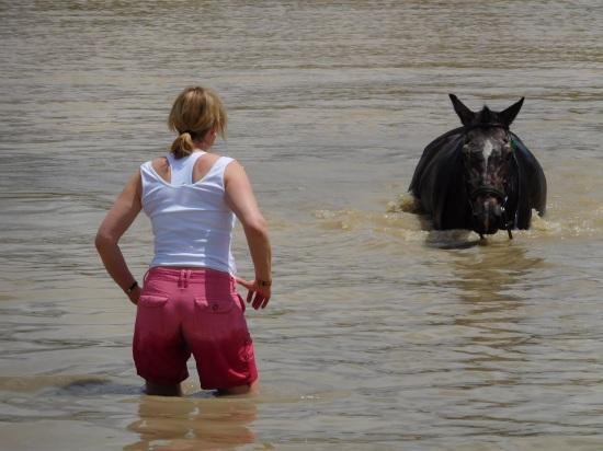 Horse swimming