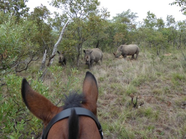 Riding with rhino by Anne Lester