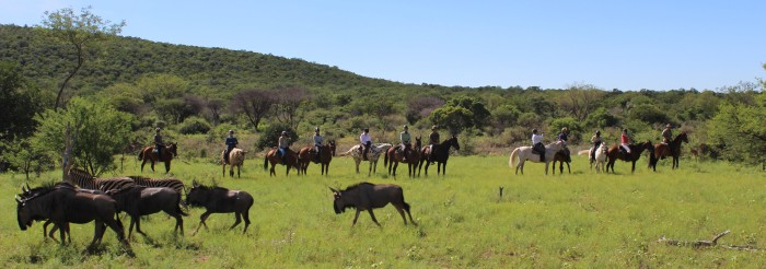 twt-ride-day-3-twelve-riders-with-wilderbeest