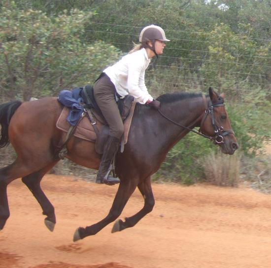 Horse flying