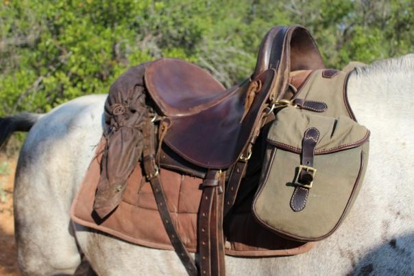 Sophie's saddle