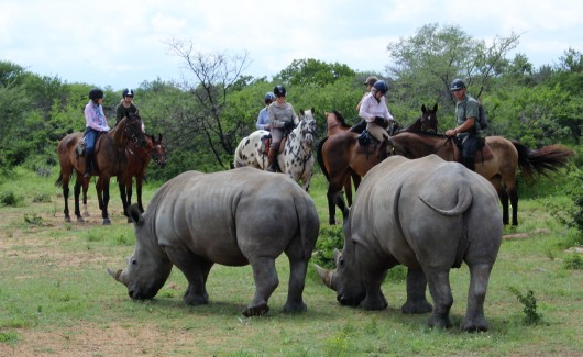 twt-riders-finding-white-rhino-2017