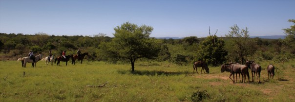 day-3-of-twt-ride-finding-wildebeeste