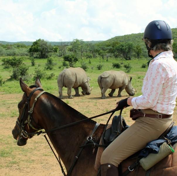 twt-ride-2017-lulu-ferrand-watching-rhino