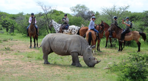 twt-ride-day-2-encountering-a-white-rhino