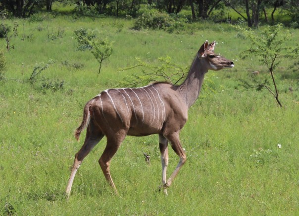 twt-ride-day-2-female-kudu