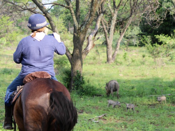 twt-ride-day-2-sally-photographing-warthog-piglets