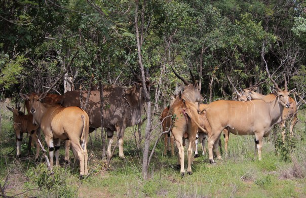 twt-ride-day-3-livingstone-eland