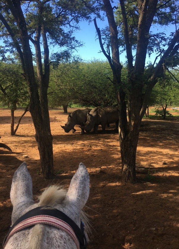 twt-ride-day-3-spotting-rhino-over-the-horses-ears