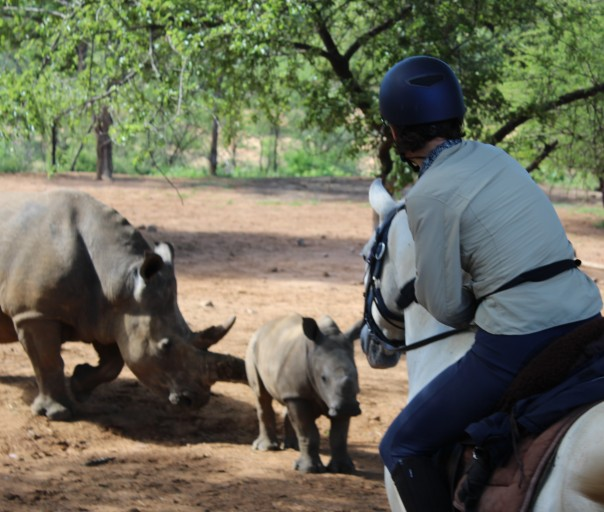 twt-rider-with-baby-rhino-2017