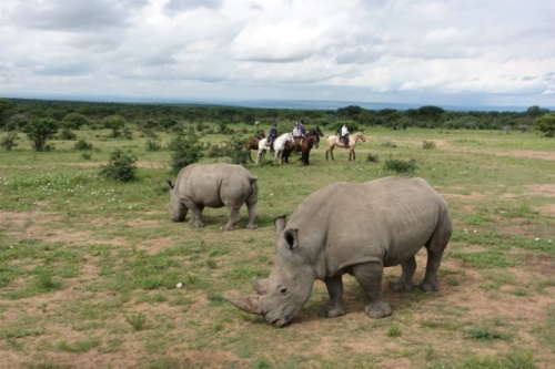 twt-riders-2017-encountering-white-rhino