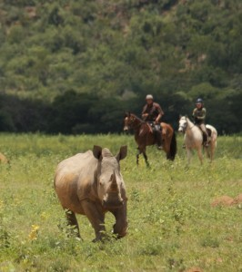 Ant Baber and Sam Scott with one white rhino TWT Ride 2017