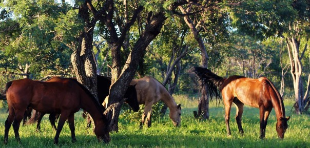 twt-horses-grazing-day-4