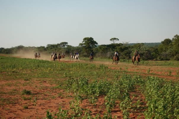 TWT Ride Cantering at the end of the ride