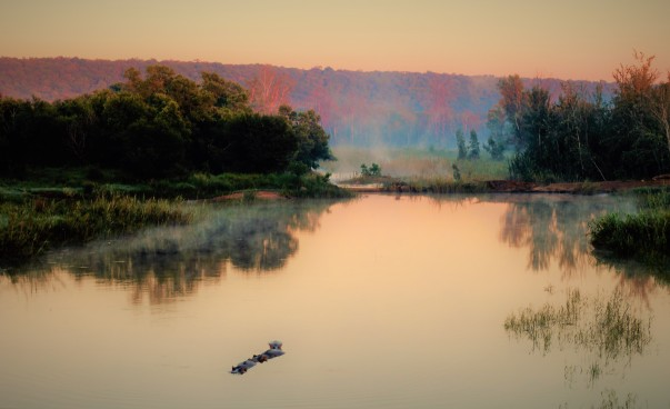 TWT Ride Day 6 early morning hippo in the Palala River