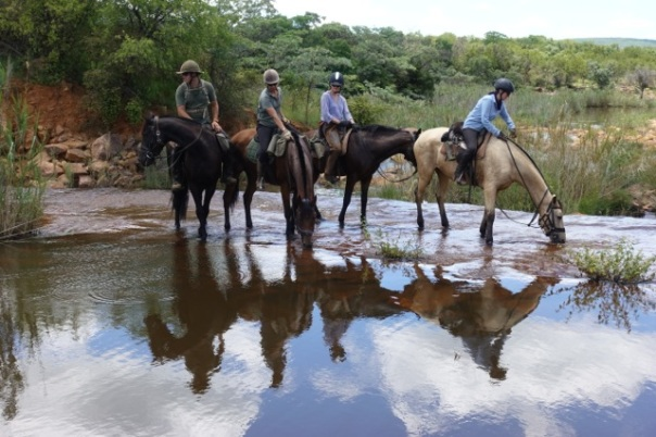 twt-ride-guides-and-riders-letting-the-horses-drink-on-lapalala