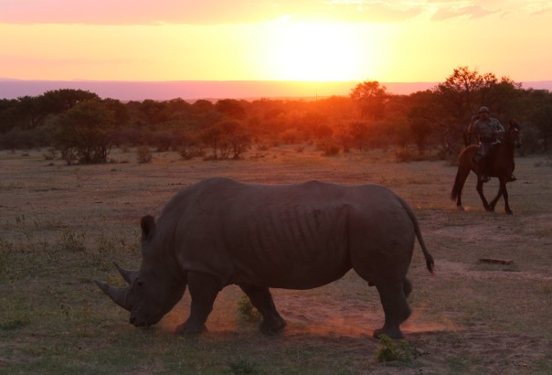 TWT Ride 2018 DAY 0 - Ant riding with a rhino at sunset - photo Sophie Neville