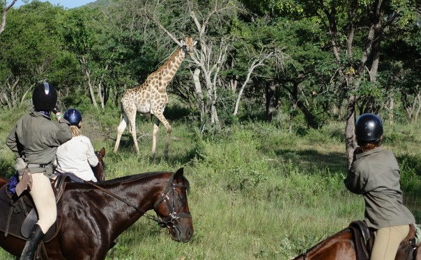 TWT Ride 2018 DAy 4 spotting giraffe on Lindani