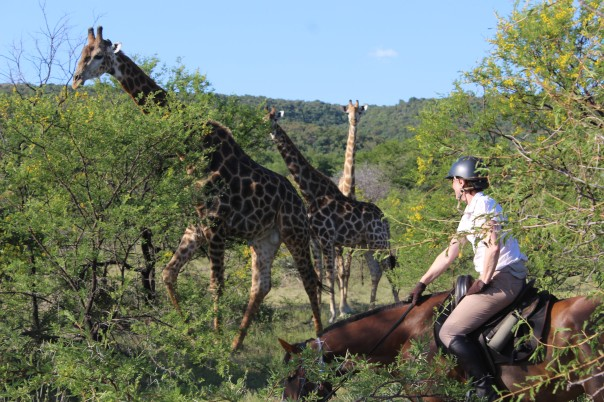 TWT Ride DAY 1 - Mary with three giraffe.jpg