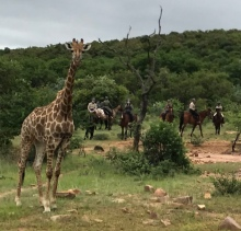 TWT Riders with giraffe - photos Sophie Neville